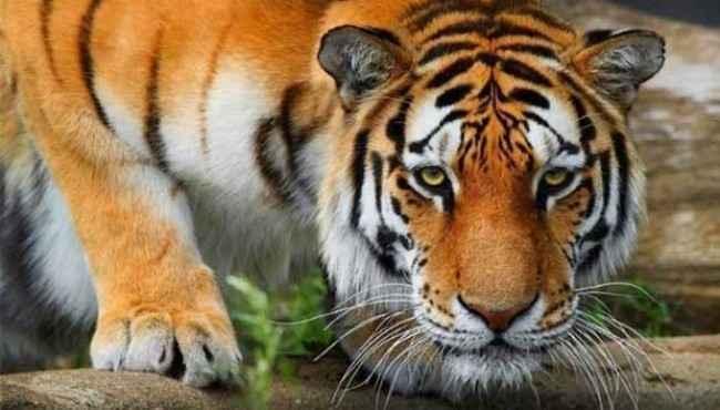 Doğada En Çok İnsan Öldüren Hayvanlar