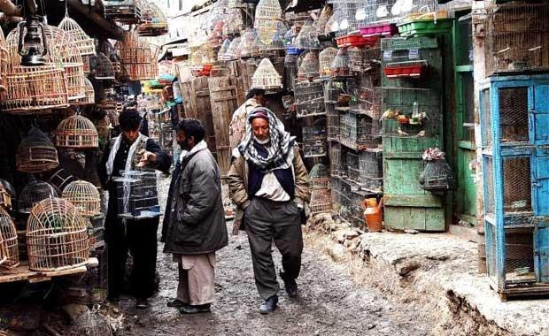 Afganistan - Kabil - Ka Firushi Kuş pazarı