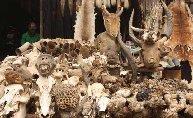 Togo - Lome Voodoo Market