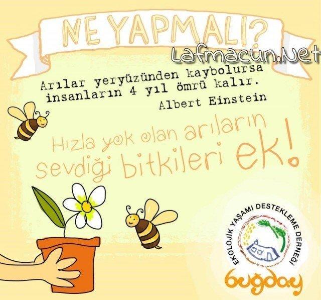 Arıların Önemi Büyüktür Onları Destekle