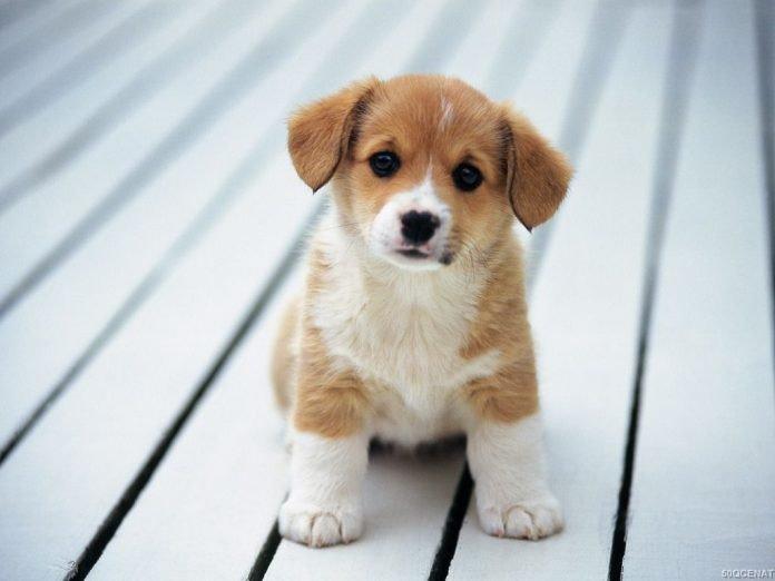 Evcil Hayvan İlanları Sayesinde Yakın Dostunuza Kavuşun