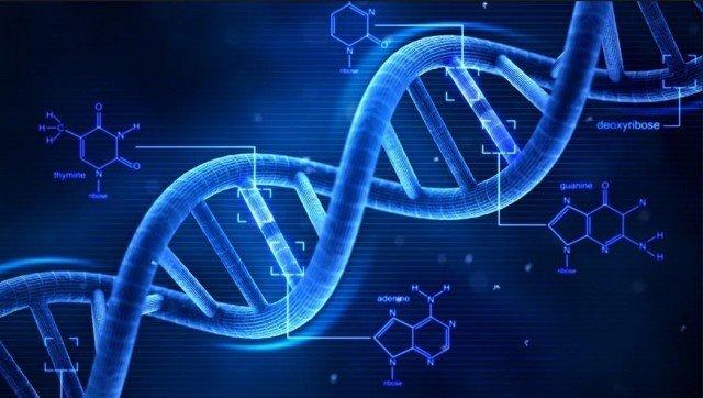 ALFRED HERSHEY & MARTHA CHASE DNA Şifresinin Çözülmesi
