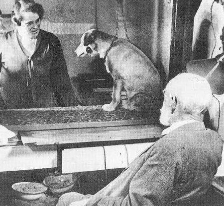 IVAN PAVLOV - Pavlov'un Köpeği