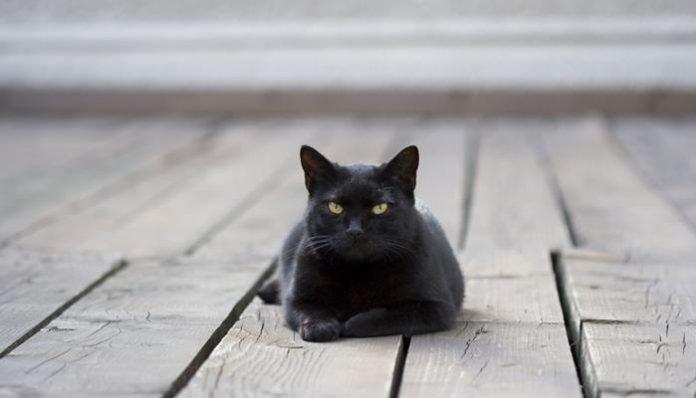 Japonya'da bir çok ülkenin aksine kara kedilerin uğur getireceğine inanılır.