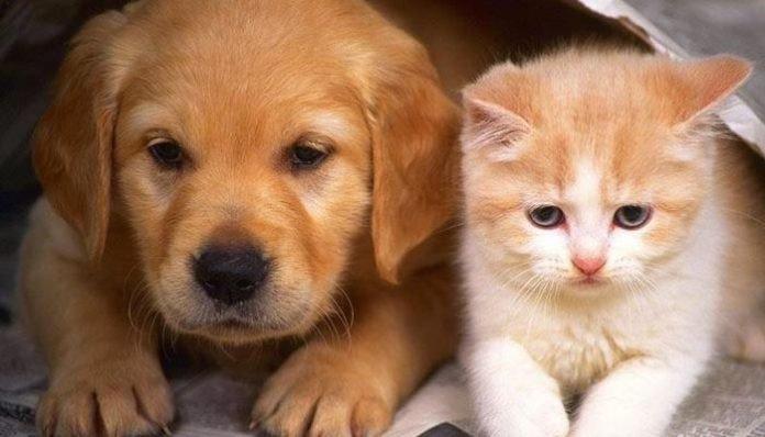 Japonya'da bulunan evcil hayvan sayısı çocuk sayısından daha fazladır.