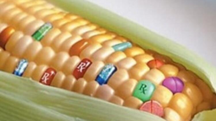 Genetiği değiştirilmiş mısırların yan etkileri bilinmemektedir