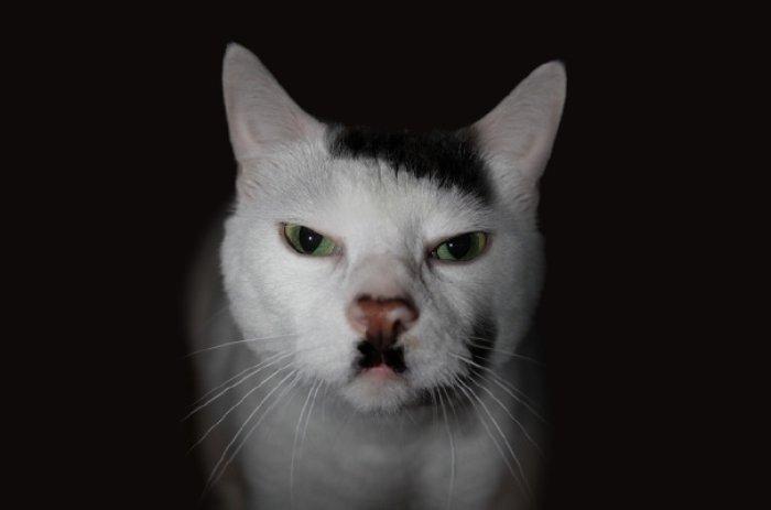 Snowball Hitler Ölmedi Kedi Oldu
