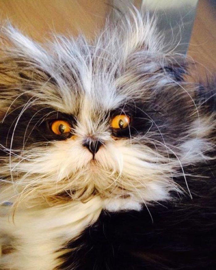 Atchoum isimli Bu Kedi Kurt Adam Olacakmış Geç Kalmış