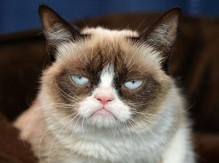 Grumpy isimli Piskopat Kedi