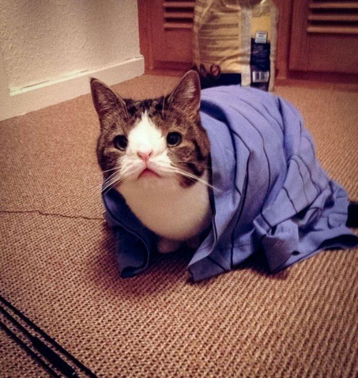 Monty isimli Kedi Doğuştan Burun Köprüsü Olmadığı için Değişik Bir Tipi Var
