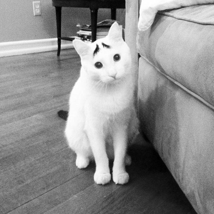 Sam Kedilerin Küçük Emrahı