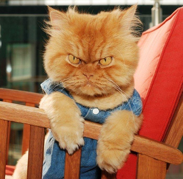 Garfi Kötü Kedi Şerafettinin Gerçek Yaşamdaki Hali