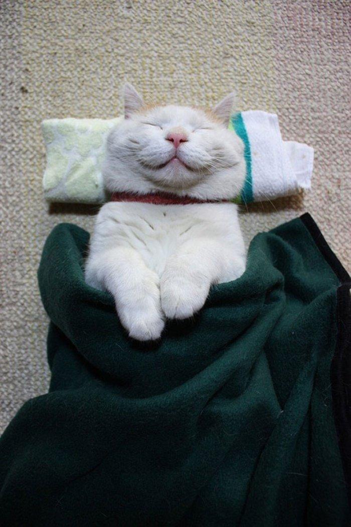 Shiraneko isimli Bu Kedi Daha Mutlusunun Resmi Çekilene Kadar En Mutlusu