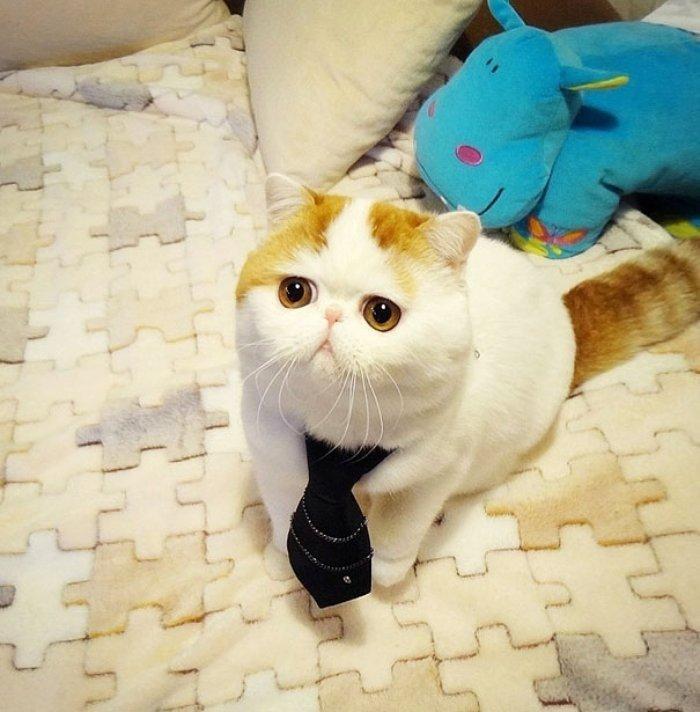 Snoopy Dünyanın Gelmiş Geçmiş En Masum Kedisi