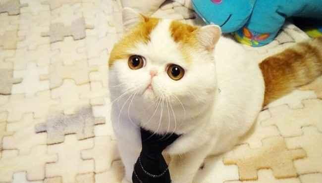 Sosyal Ağlarda Paylaşım Rekorları Kıran En Ünlü 15 Kedicik