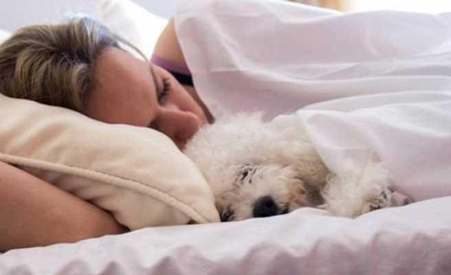 Bencil Yatak Arkadaşları