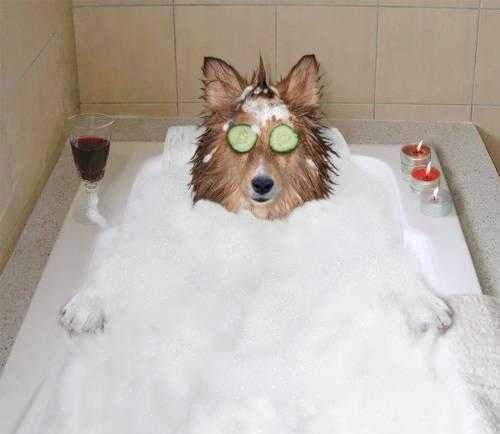 Köpeklere-Özel-Banyo-Sırları-Ajanimo-4