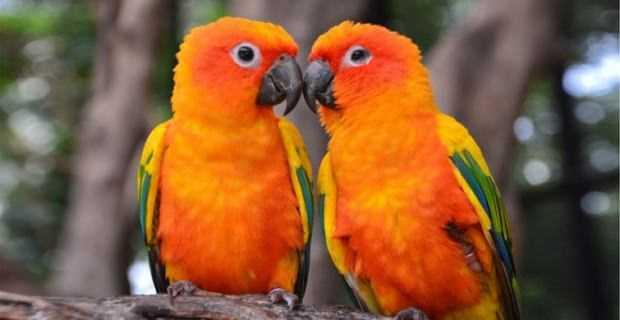 evde papağan besleme