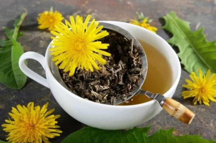 Karahindiba Çayı Hazırlarken Dikkat Edilmesi Gerekilen Noktalar