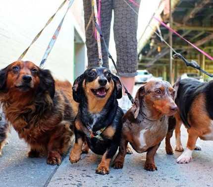 Evcil Hayvan Bakıcılığı Yaparak Para Kazanmak