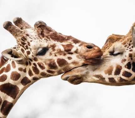 Hayvanların İnsanlardan Daha Sevgi Dolu Olduğunu Gösteren 27 Fotoğraf