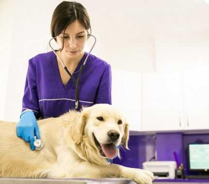 Kedi ve Köpek Hastalıkları Nasıl Tedavi Edilir?