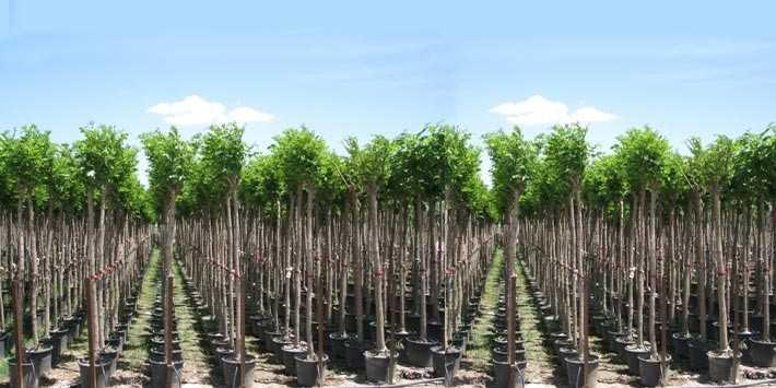 Özel Ağaçlandırma Nedir? Özel Ağaçlandırma Nasıl Yapılır?