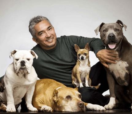 Köpekler Hakkında Bilmeniz gereken 10 detay