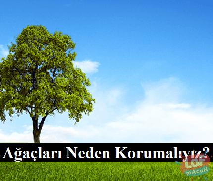 agaclari-neden-korumaliyiz1