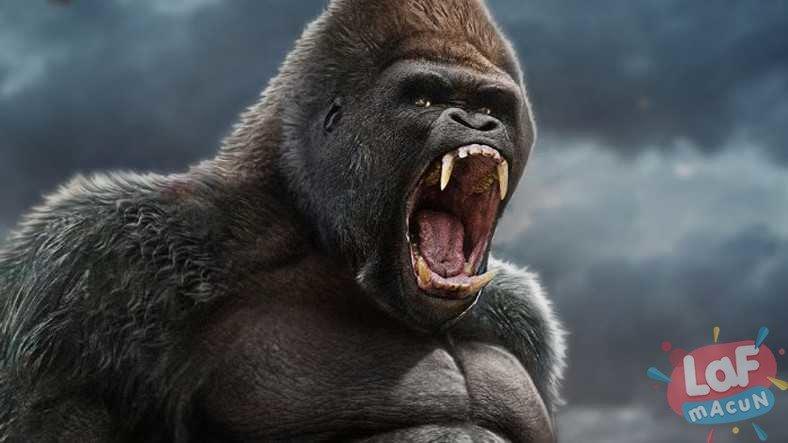 Goril