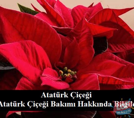 Atatürk Çiçeği ve Atatürk Çiçeği Bakımı Hakkında Bilgiler