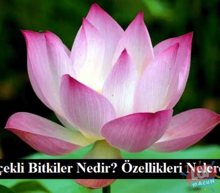 Çiçekli Bitkiler Nedir? Özellikleri Nelerdir?