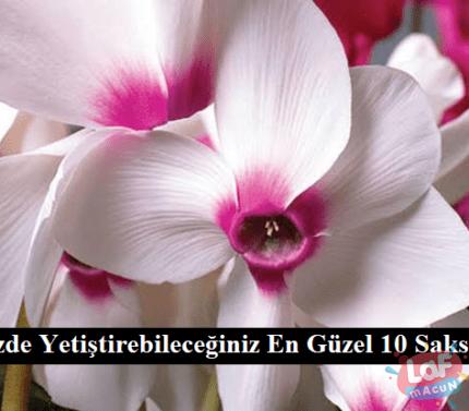 Evinizde Yetiştirebileceğiniz En Güzel 10 Saksı Çiçeği