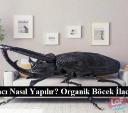 Böcek İlacı Nasıl Yapılır? Organik Böcek İlacı Yapımı