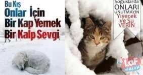 Soğuk kış günlerinde evimizden dışarı çıkası yok hiçbirimizin. Evimizde sıcak yemeğimizve sıcak yatağımız var. Peki sokak hayvanları için ne yapabilirsiniz?