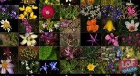 Türkiye'de Bulunan 10 Endemik Bitki