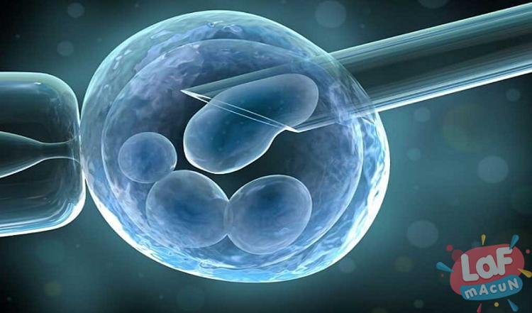 tüp bebek tedavisi adımları