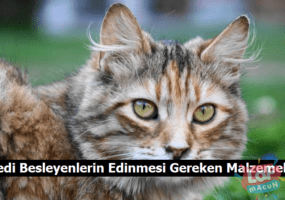 Kedi Besleyenlerin Edinmesi Gereken Malzemeler