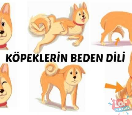 Köpek Davranışlarının Anlamları: Ne demek İstiyorlar?