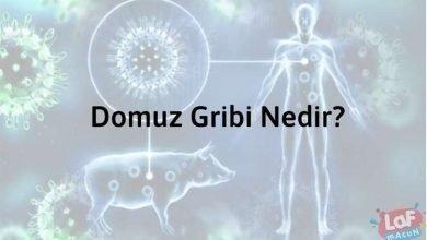 Photo of Domuz Gribi Nedir?
