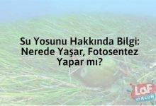Photo of Su Yosunu Hakkında Bilgi: Nerede Yaşar, Fotosentez Yapar mı?